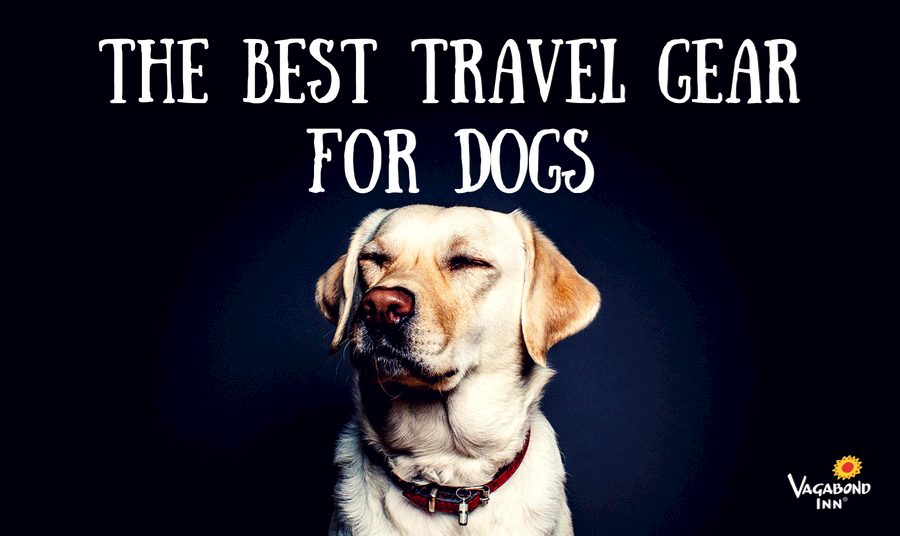The Best Travel Gear For... Dogs 20681182e