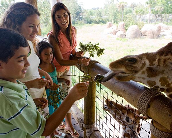 Chula Vista - San Diego Zoo