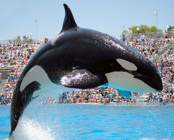 Chula Vista - Sea World
