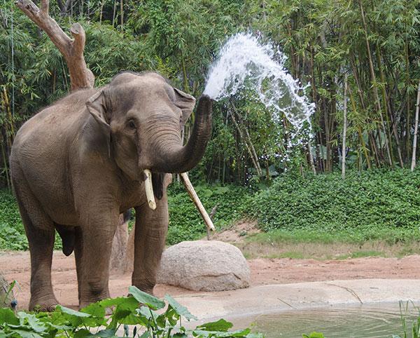 Glendale - LA Zoo and Botanical Gardens