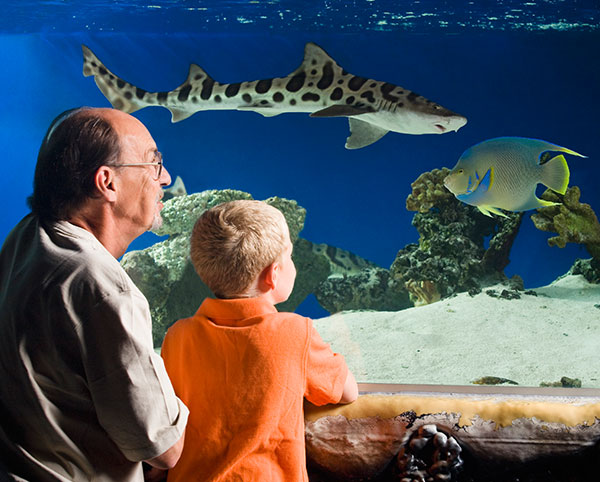 Long Beach - Aquarium of the Pacific