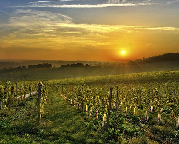 San Luis Obispo - Wolff Vineyards
