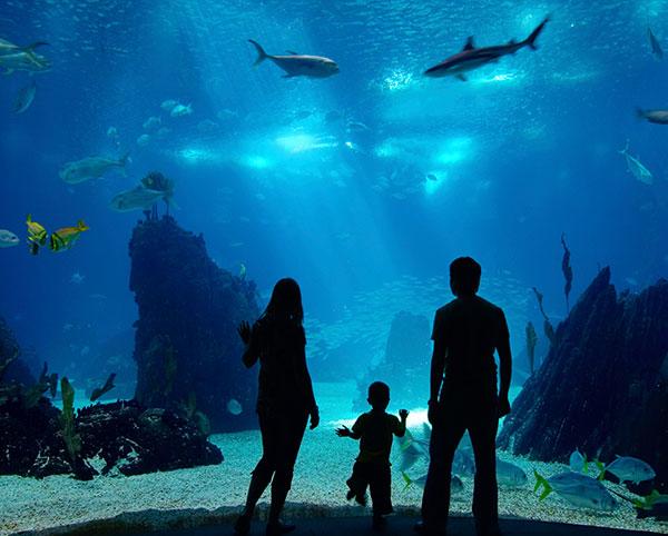 San Pedro - Cabrillo Marine Aquarium