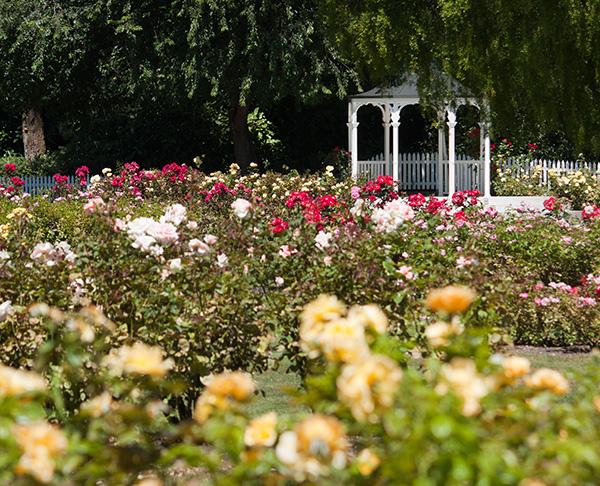Whittier - Rose Hills Memorial Park